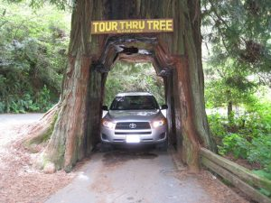 Tour Thru Tree