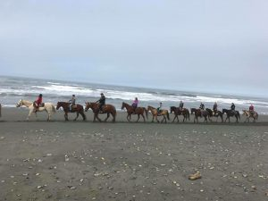 Crescent Trail Rides on the beach